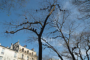 """April, 16th 2020 - Paris, Ile-de-France, France: Birds in the trees, nature takes back in the spread of the Coronavirus, during the second month of near total lockdown imposed in France. A week after President of France, Emmanuel Macron, said the citizens must stay at home for at least 15 days, that has been extended. He said """"We are at war, a public health war, certainly but we are at war, against an invisible and elusive enemy"""". All journeys outside the home unless justified for essential professional or health reasons are outlawed. Anyone flouting the new regulations is fined. Nigel Dickinson"""