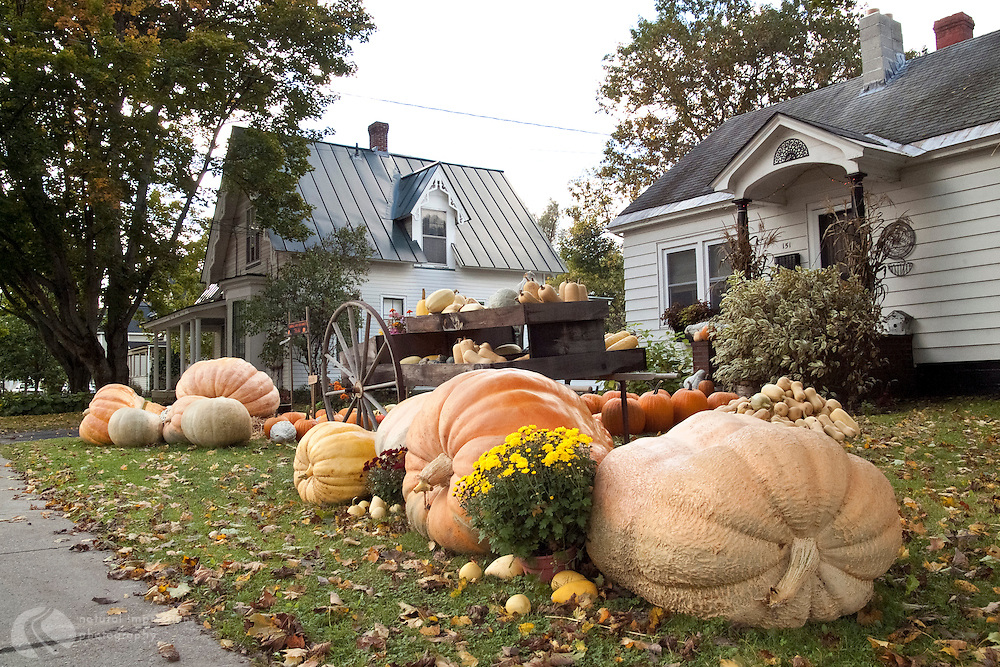 While driving through a small town in Vermont while on our leafpeeping road trip in New England, we caughta  glimpse of this year's state fair winnng pumpkin.  I'd say they win 'Best Yard Display' too!