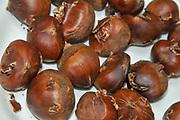 Fresh chestnuts before roasting