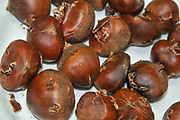 Fresh chestnuts before roasting