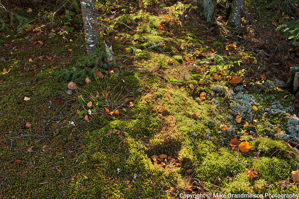 Forest floor in the boreal forest at Tower Lake<br />Kenora<br />Manitoba<br />Canada