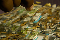 Detail of a box of moth specimens collected in the rain forest of Papua New Guinea.