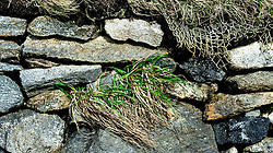 Close up detail at Gearrannan Black House Village, Isle of Lewis, Outer Hebrides, Scotland<br /> <br /> (c) Andrew Wilson | Edinburgh Elite media