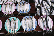 Fish for sale, laid out on plates, in a market in Chiang Mai, Thailand. Material World Project.