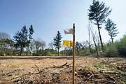 Nederland, Groesbeek, 18-04-2019 Afgelopen weken zijn er in de bossen rond Groesbeek veel bomen gekapt . Met harvesters, machines die de bomen in een keer kunnen zagen, onttakken en in stukken verdelen, worden open plekken in het bos gemaakt. De grond wordt omgewoeld en stronken uitgefreesd.  Staatsbosbeheer en natuurmonumenten noemen dit oogsten van hout noodzakelijk om de biodiversiteit in de bossen te herstellen en ruimte te geven voor andere soorten flora en fauna, planten en dieren, om te floreren. Foto: Flip Franssen