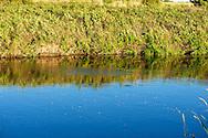 Silver Creek East, fish swirl near the bank