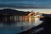 Great Blue Herons Fishing - after dusk in Port Angeles harbor, with the Nippon paper plant glowing in the distance.