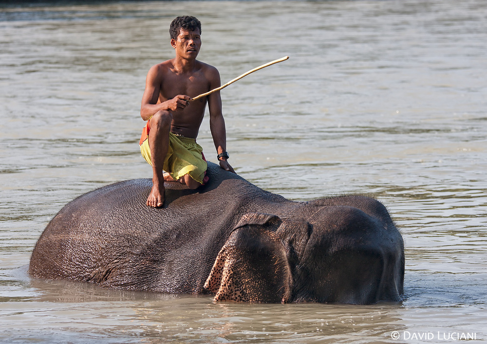 A nepalese mahout sitting on his elephant.