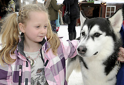 © Licensed to London News Pictures. 26/11/2011. Lamberhurst ,UK. A girl playing with husky dogs on the opening day of LaplandUK  in Lamberhurst, Kent today (26/11/2011). The park which is recreated from scratch every year, recreates Father Christmas' arctic homeland. Photo credit : Grant Falvey/LNP