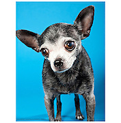 Great dog photos help senior dogs find homes.