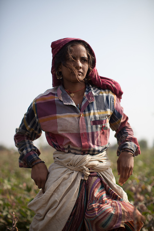 Kantaben Parbatbhai Charda, Fairtrade-certified cotton farmer in Rapar district, Gujarat, India.<br /> <br /> Fairtrade Australia and New Zealand support cotton producer groups in India. Fairtrade-certified groups benefit from Fairtrade through guaranteed prices for their produce, technical assistance to improve quality and output, and the Fairtrade premium which the producer groups decide what to do with, often using it for education and health care for their members' communities.<br /> <br /> RDFC (formerly Agrocel) is a Fairtrade-certified group of thousands of farmers who grow cotton in the Rapar, Kutch region of Gujarat in western India