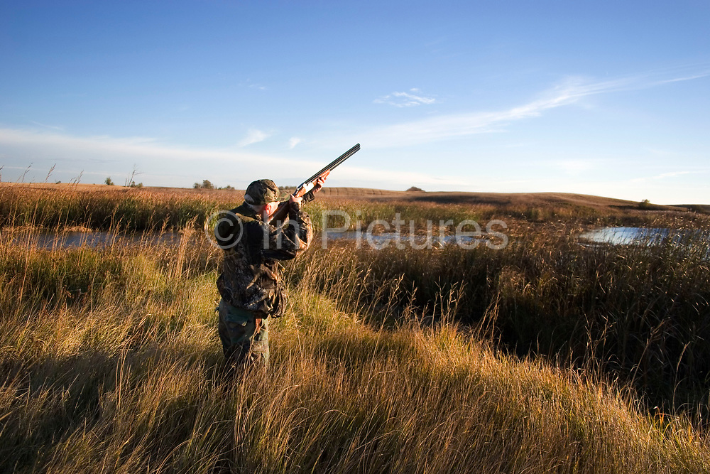 Experienced hunter Timmy Stein aims his shotgun at an incoming duck out in North Dakota, west of Minot. Timmy has been shooting for most of his life and puts considerable efforts into his hunting, efforts which reward him with wild game meats. In this part of North Dakota, glacially formed flat land is filled with pock-marked shallow holes, which fill with eater making ideal sloughs for ducks such as Mallard, Widgeon and the more prized Canvas Back.