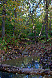 08 October 2013:   As with most forests, trees fall and are only removed if they are a danger to humans.  These have fallen across a creek in Yellowwood State Forest.<br />