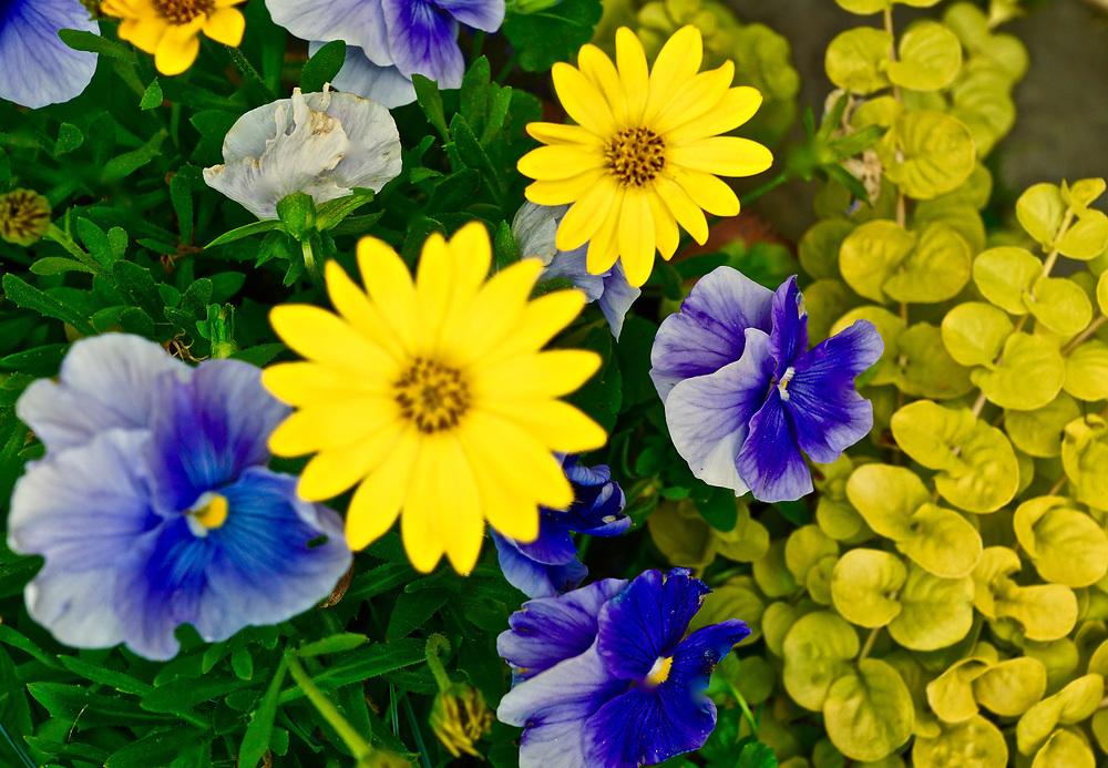 Mixed flora, Chanticleer Gardens, Wayne, PA