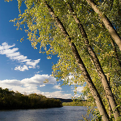 Silver maple trees lean over the Connecticut River at the Sawyer Farm in Walpole, new Hampshire