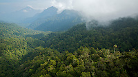 Aerial view of the Foja Mountains rain forest.