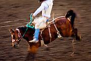 Horse at Helena Rodeo