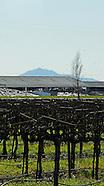 Vines ~ Lodi AVA
