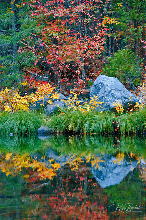 Fall color and grasses along the Merced River, Yosemite Valley, Yosemite National Park, California