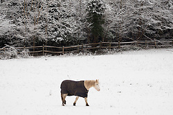 © Licensed to London News Pictures. 17/01/2016. Woldingham, UK. A horse plods across a snow covered paddock near the village of Woldingham in Surrey today (17/01/2016) after snow hit parts of the UK for the first time this winter. Photo credit: Matt Cetti-Roberts/LNP