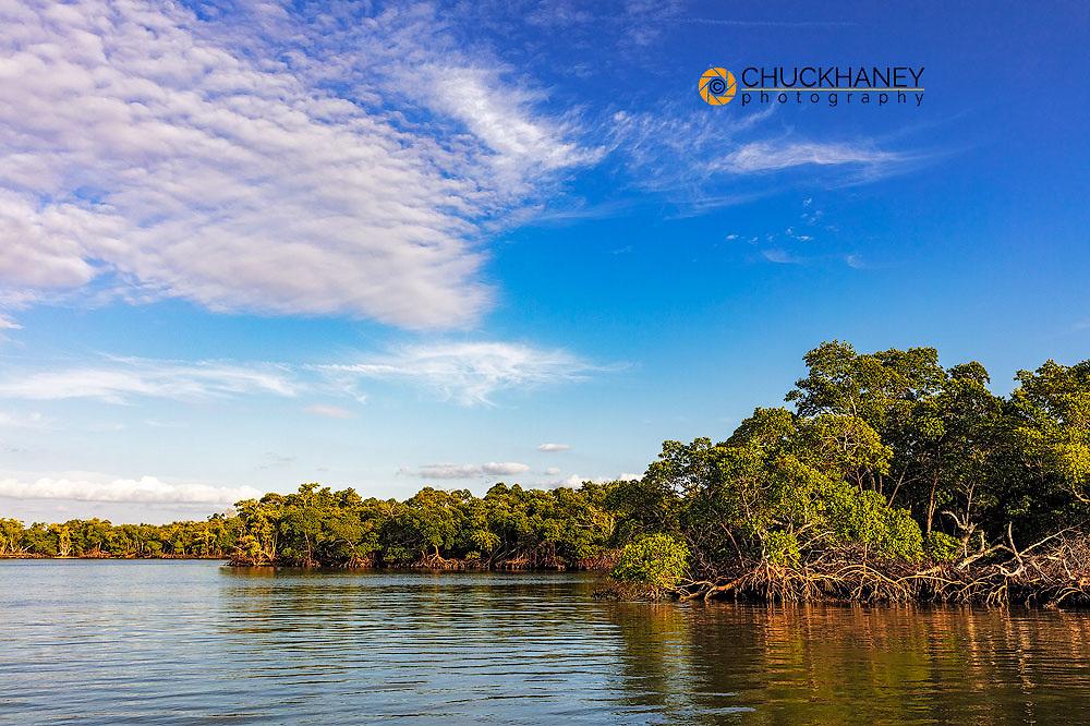 Red mangrove islands at Ten Thousand Islands NWR in Everglades National Park, Florida, USA