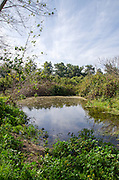 winter pool at Ramat Hanadiv is a nature park and garden covering 4.5 km at the southern end of Mount Carmel, Israel