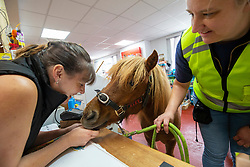 Sarah Harrison with Glen, her Shetland Pony, that she takes out for walks. Pic with Ashley Condi, in the Abbey Pet Shop.