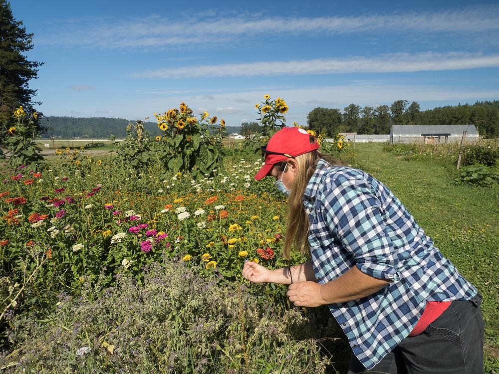 United States, Washington, Carnation Farms