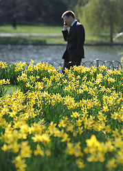 ©London News pictures. 10/03/11 A business man on the phone walks past the daffodils. People enjoy the early sunshine in London's St James' Park today (Mon). Picture Credit should read Stephen Simpson/LNP