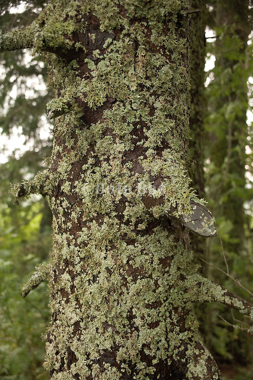 tree trunk covered with moss Germany Black Forest