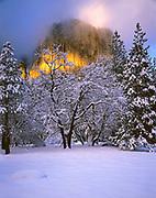 Oaks in Winter andSunset Light on El Capitan,Yosemite National Park, California