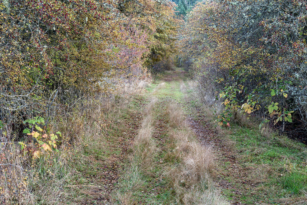An old farm trail through the fields and Hawthorn trees in Burgoyne Bay Provincial Park at Salt Spring Island, British Columbia, Canada.
