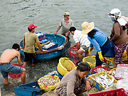 Local fishermen bring freshly caught fish from their fishing boats using a traditional small round boat known as a coracle to be sorted and processed at the harbour in the coastal fishing village of Ninh Hai, Ninh Thuan province, Central Vietnam. The fish will be sold at the local fresh market where a large variety of exotic fish are available for sale as well as other products.