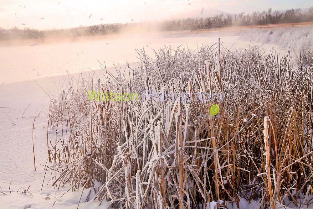 Snow Flies in the Morning Sun