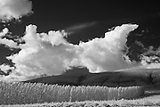 Black and white infrared photographs