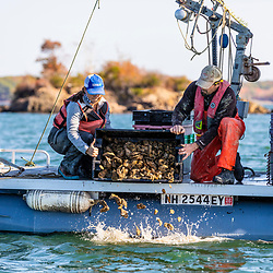 The Nature Conservancy's Brianna Group and Steve Weglarz of Cedar Point Oyster Company add oysters to a restoration reef near Nanny Island as part of the Supporting Oyster Aquaculture and Restoration (SOAR) program. Great Bay in Durham, New Hampshire.