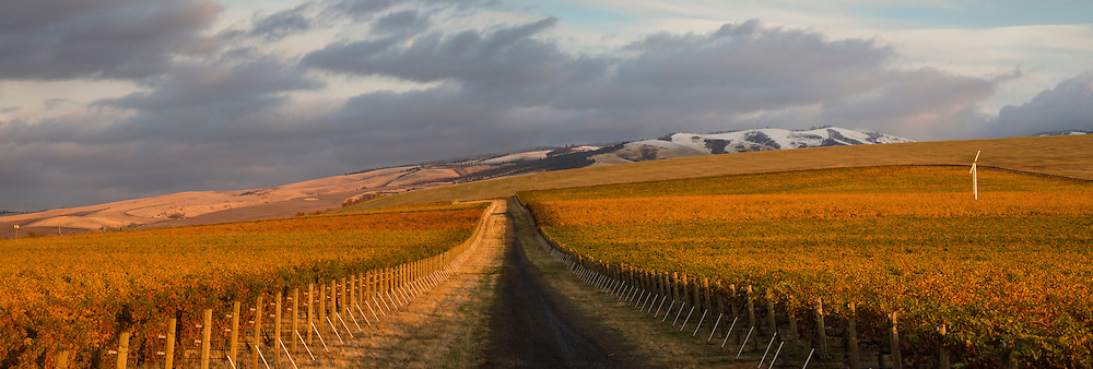 Les Collines Vineyard with Blue Mountains in background, Walla Walla, Washington