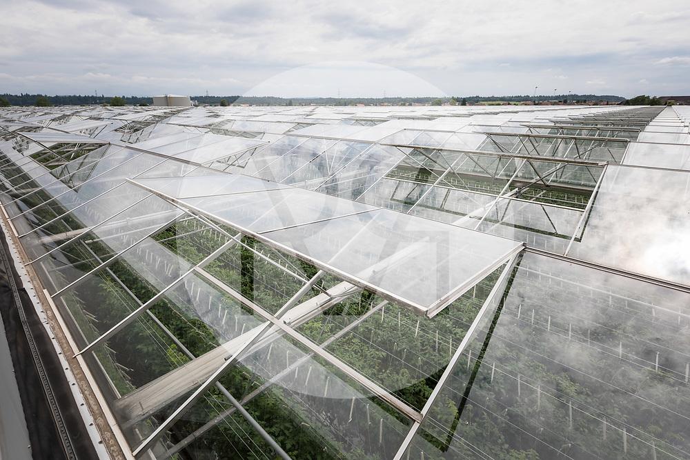 SCHWEIZ - NIEDERBIPP - Blick über die Glasgewächshäuser in denen Tomaten angebaut werden, bei Bösiger Gemüsenkulturen AG - 21. Juni 2019 © Raphael Hünerfauth - http://huenerfauth.ch