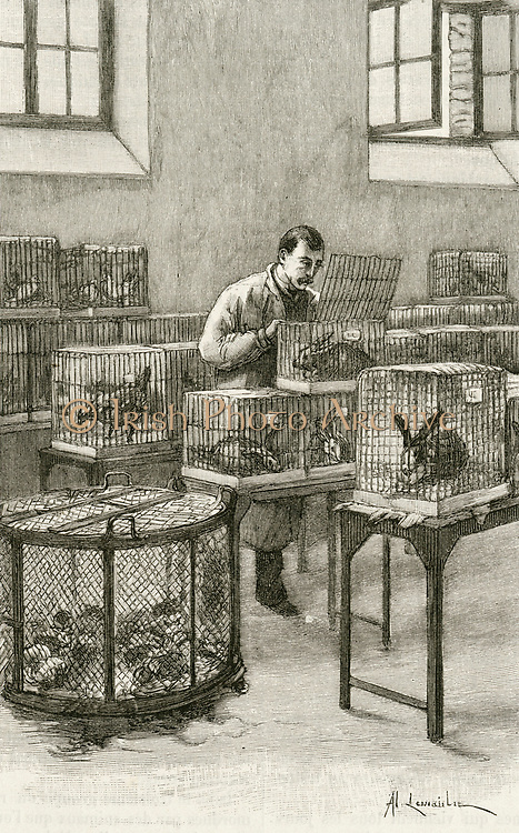 'Laboratory used by Louis Pastuer (1822-1896) during research on hydrophobia (Rabies)  at the Institut Pasteur, Paris,.  Engraving, Paris, 1873.'