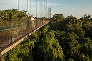 Canopy Walkway at Sacha Lodge.<br /> 275m long, 36m high rigid walkway.<br /> Napo River bordering Yasuni National Park, Amazon Rainforest<br /> ECUADOR. South America