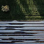 Spargel Landerer, Meckenbeuren, The white gold, das weiße Gold, Asparagus, Spargel, Germany