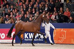 311, Kensington<br /> KWPN Stallionshow - 's Hertogenbosch 2018<br /> © Hippo Foto - Dirk Caremans<br /> 03/02/2018