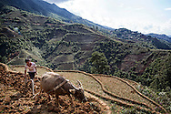 Elevated plowing in terraced rice fields along the valley leading to Che Tao, Mu Cang Chai district, Yen Bai Province, Vietnam Southeast Asia