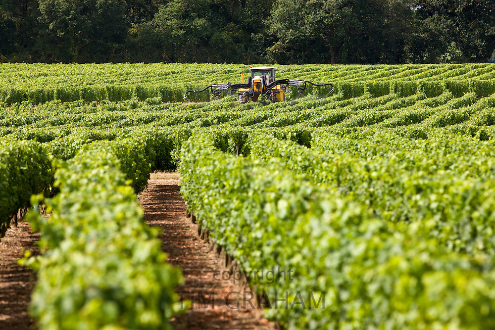 Vine tractor crop-spraying vines in a vineyard at Parnay, Loire Valley, France