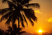 Sunset with palm<br />