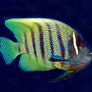 ; picture taken Triton Bay, West Papua; Indonesia.