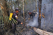 RAINFOREST FIRES DEFORESTATION, Amazon, near Boavista, northern Brazil, South America. Brazilian firemen extinguishing forest fires with water hoses. Ecological biosphere and fragile ecosystem where flora and fauna, and native lifestyles are threatened by progress and development. The rainforest is home to many plants and animals who are endangered or facing extinction. This region is home to indigenous primitive and tribal peoples including the Yanomami and Macuxi.