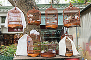 Songbirds in traditional bamboo cages at the Yuen Po Street Bird Garden in Mong Kok, Kowloon, Hong Kong.
