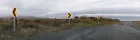 Rural Road with Arrow Signs. (24078 x 6943 pixels)