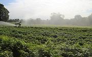 Irrigation sprayer watering crops. Boyton, Suffolk, England, UK